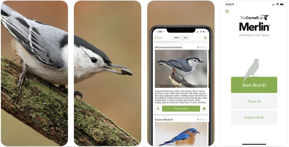 https://www.internet4classrooms.com/images/monthly_highlights/merlin_bird_id_screenshots.jpg